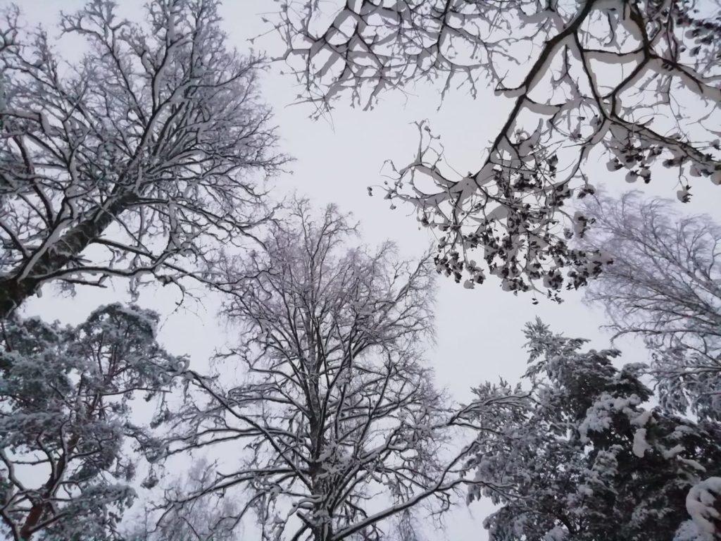 Punkaharju, sotto le nevi della Finlandia