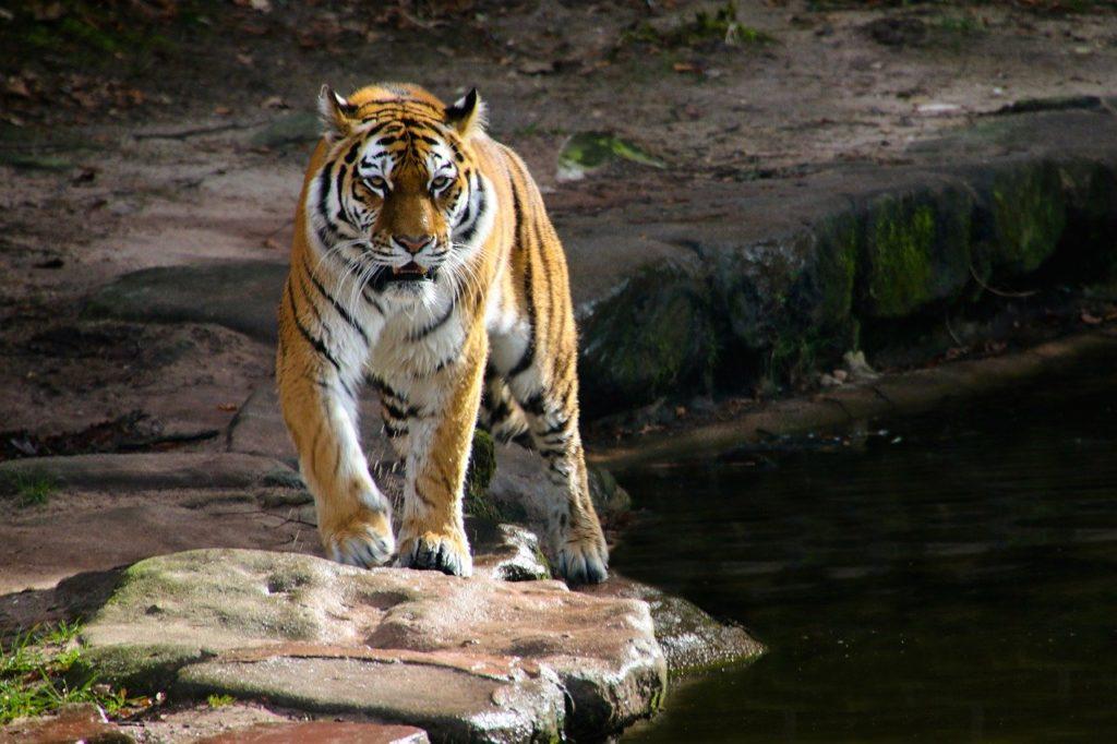 Trappole animali e Asia del sud-est